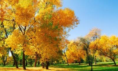 Im Herbst sollten Eltern mit ihren Kindern viel in der Natur spielen