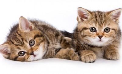 Ob Katzen und Babys sich vertragen fragen sich viele Eltern wenn ein Säugling auf die Welt kommt
