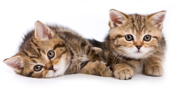 Die Die Die Gif Cat