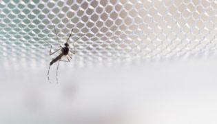 Mückennetze – Baby vor Insekten schützen