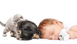 Kind, Hund, Katze und Co