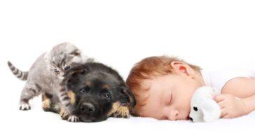 Kind, Hund und Katze