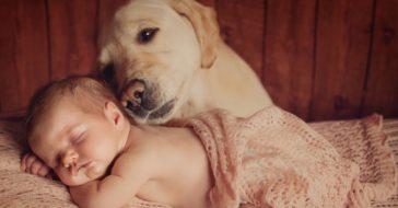 Haustiere als Seelentröster